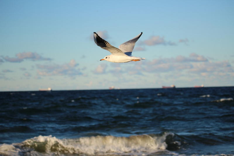 Pokoje nad morzem – porównanie. Wolne i tanie pokoje do wynajęcia nad Bałtykiem czy dwuosobowy apartament przy plaży?